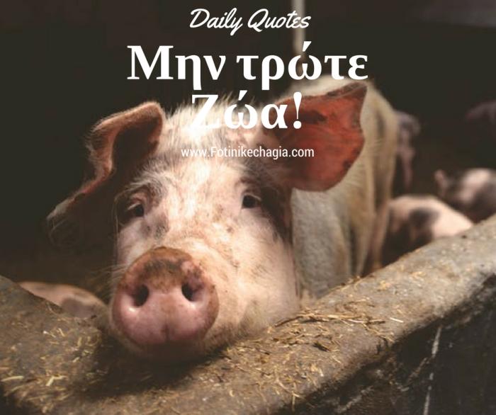 Daily Quotes Φωτεινή Κεχαγιά μην τρώτε ζώα